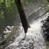 Stormy forest waterfall icon