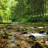 Wonderful forest river icon