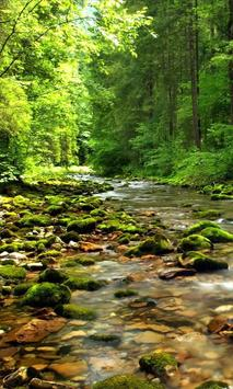 Wonderful forest river poster