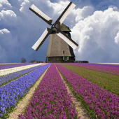 Windmill among flowers icon