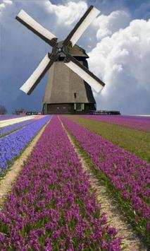 Windmill among flowers poster