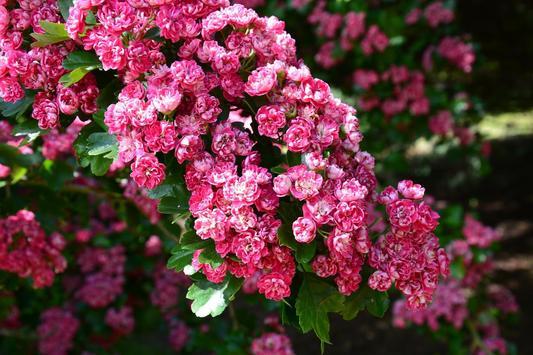 Puzzle Flowers screenshot 15