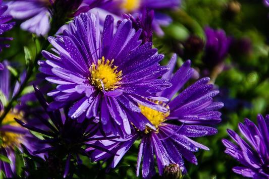 Puzzle Flowers screenshot 5