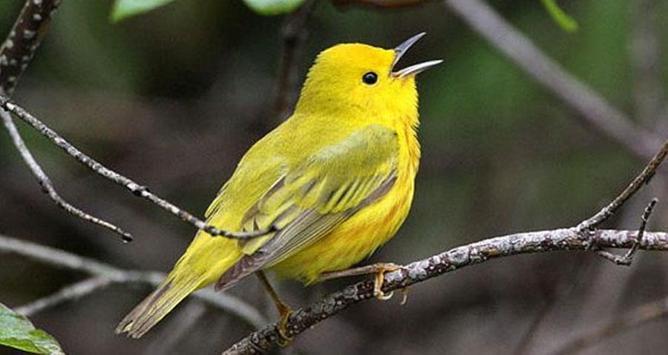 Kumpulan Masteran Kicau Burung Terbaru apk screenshot