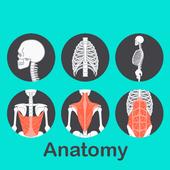 A to Z Anatomy icon