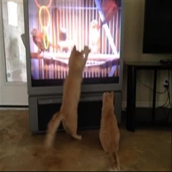 CAT TV screenshot 11