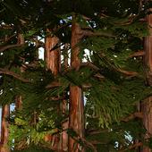 Redwoods 3D Live Wallpaper icon