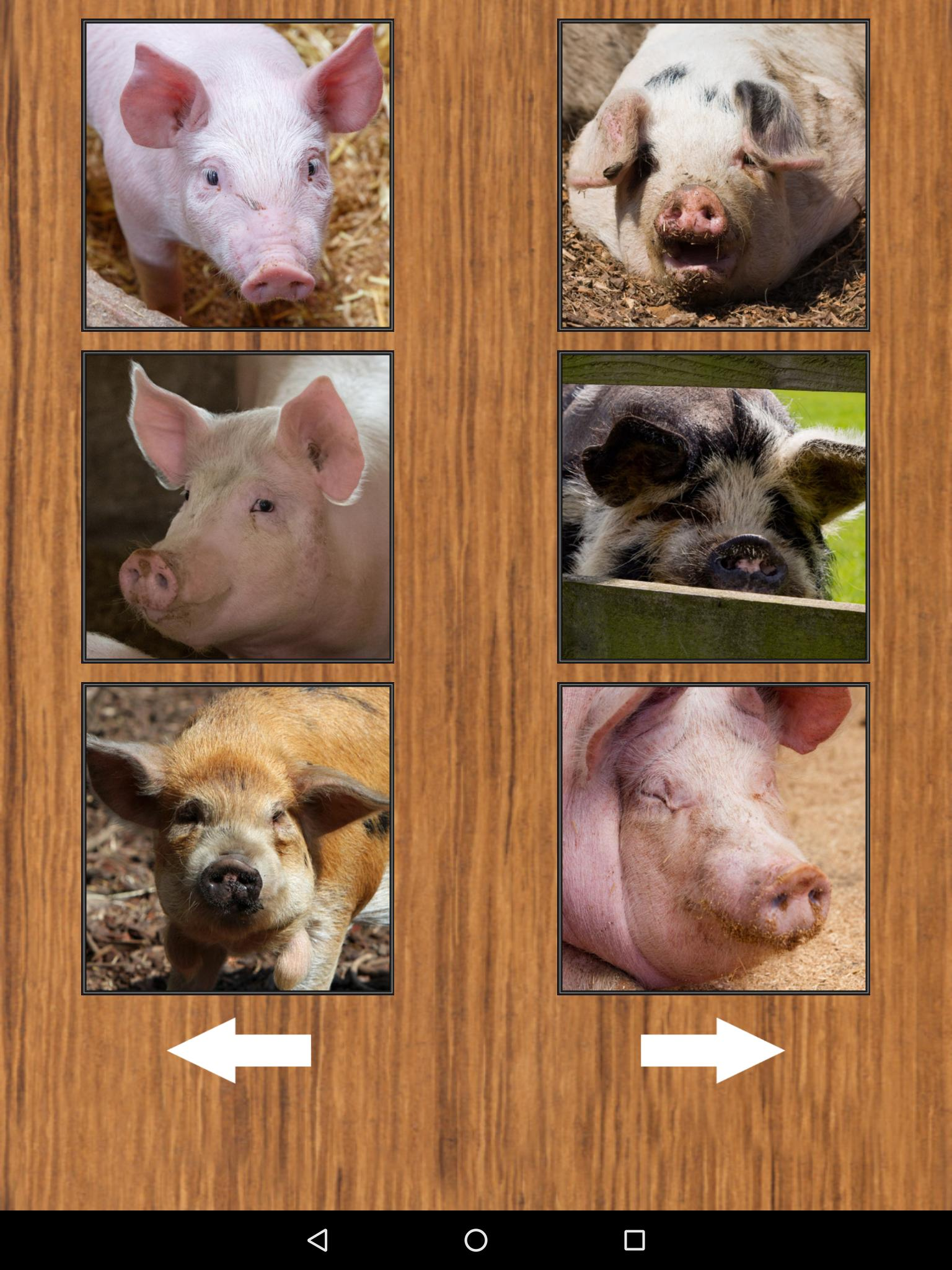 Cute Funny Pig Piglet Sounds for Android - APK Download