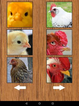 Funny Chicken Rooster Sounds apk screenshot