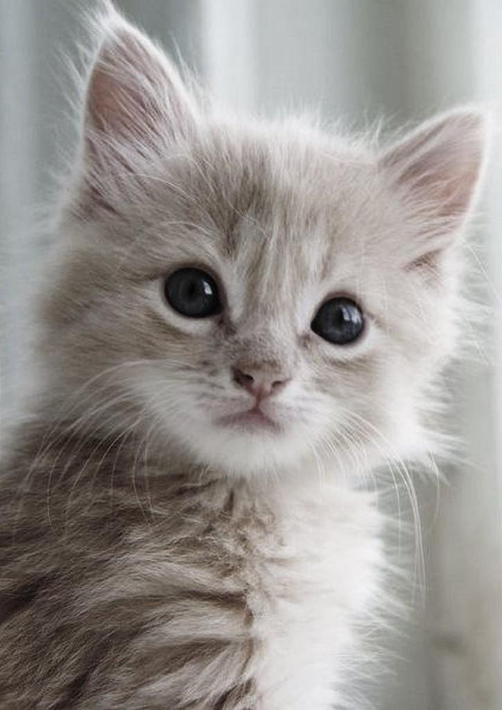 Cute Kitten Wallpaper Hd For Android Apk Download