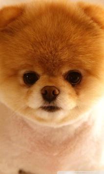 Cutey Dog Wallpaper HD poster