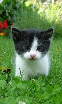 Best Cats and KittensThemes apk screenshot