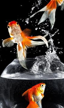 Gold Fish Wallpapers poster