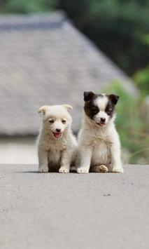 Dogs and puppies Wallpapers poster
