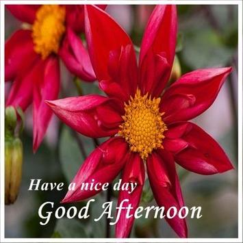 Good Afternoon Images For Android APK Download Custom Gud Afternoon Image Download