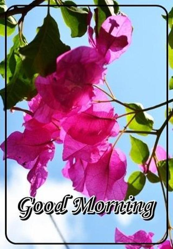 Good Morning Wishes For Android Apk Download