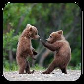Baby Bear Wallpaper icon