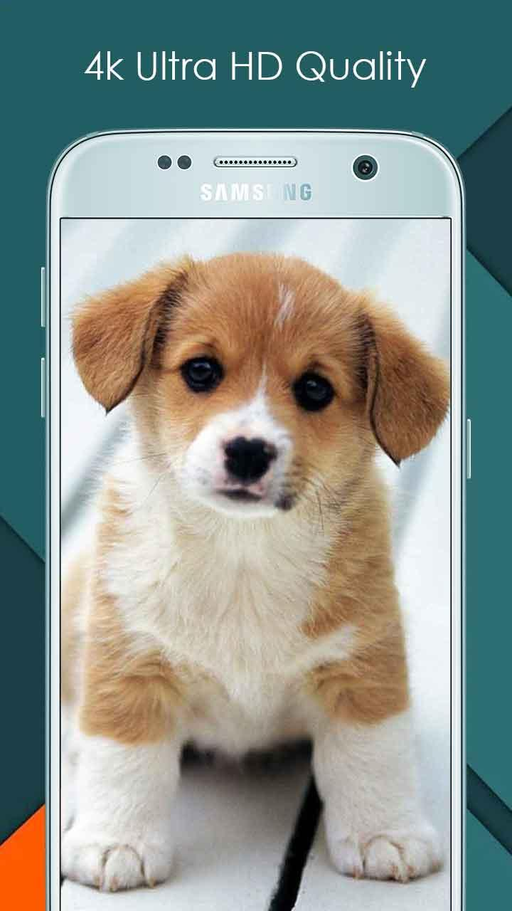 Cute Dog Wallpaper Ultra Hd Quality For Android Apk Download