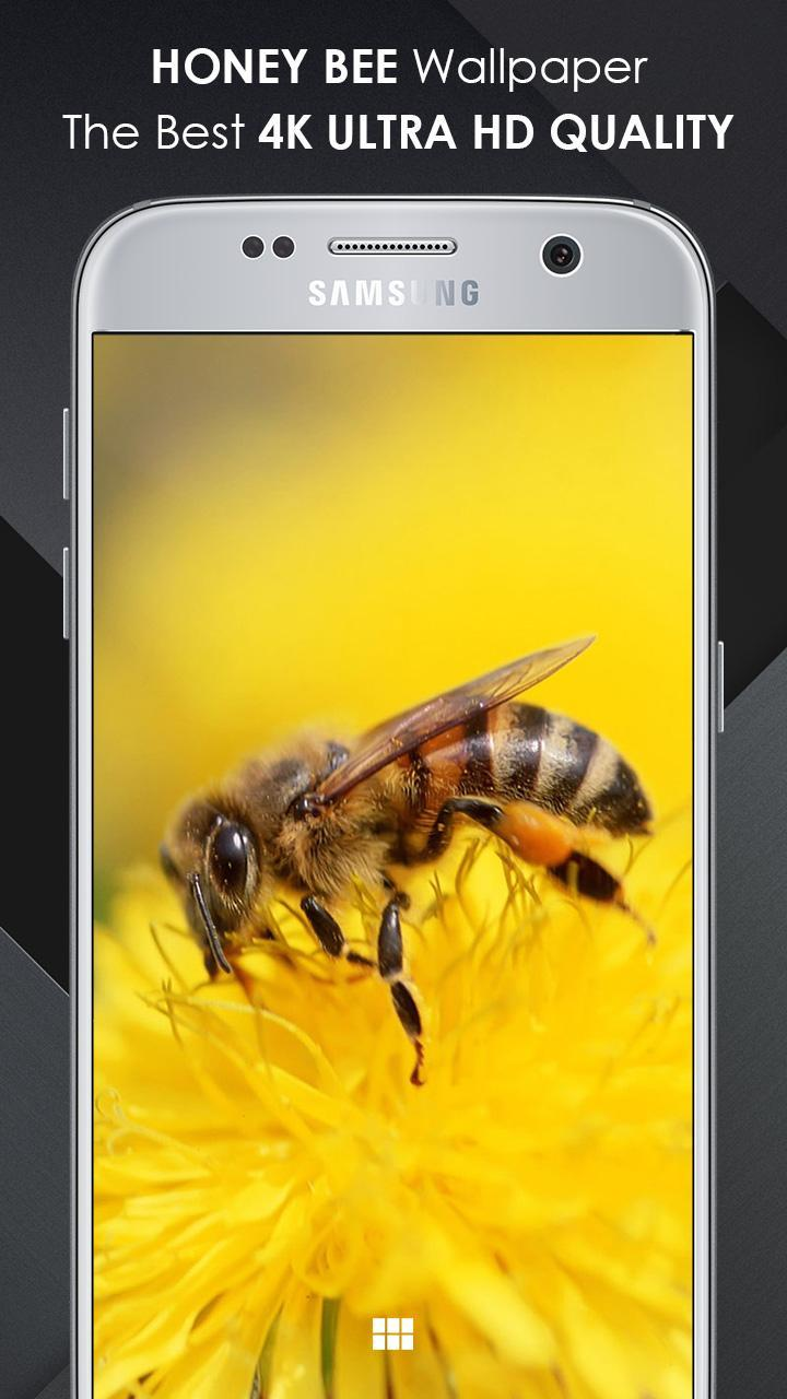 Honey Bee Wallpaper 4k Ultra Hd Quality For Android Apk