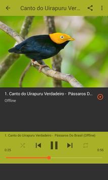 Aves do Brasil - Uirapuru screenshot 6