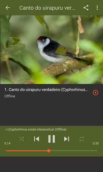 Aves do Brasil - Uirapuru screenshot 7