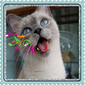 Sound Cats Prank icon