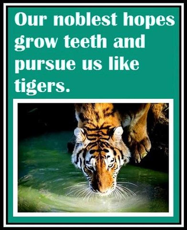 Inspirational Tiger Quotes For Android APK Download Interesting Tiger Quotes