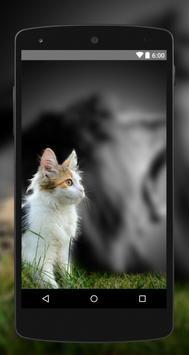 Wallpapers Cat 4K UHD apk screenshot