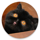 Unimpressed cats icon
