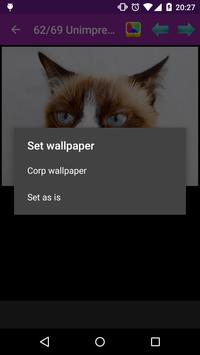 Unimpressed cats apk screenshot