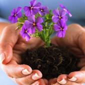 Выращивать цветы icon