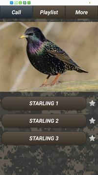 Pest bird caller apk screenshot
