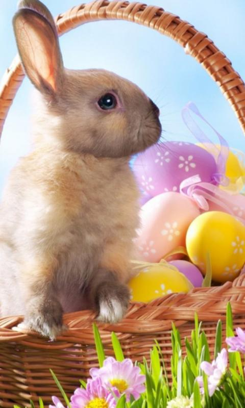 Easter Bunny Wallpapers For Android Apk Download
