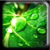 Green Natrure  wallpaper icon