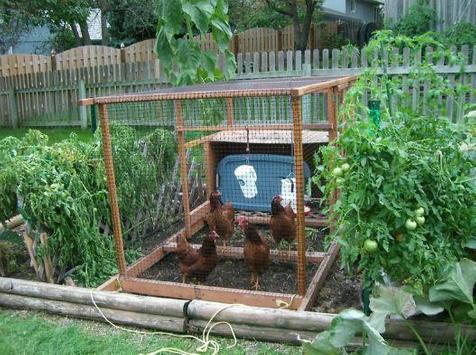vegetable garden ideas screenshot 2