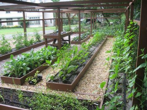 vegetable garden ideas screenshot 5