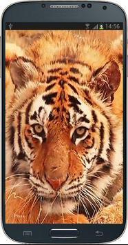 Tiger Licking Screen HD poster