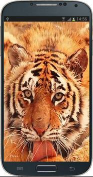 Tiger Licking Screen HD screenshot 1