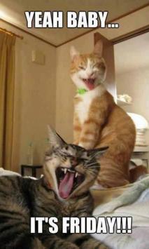 Cat Smiling Huge Live WP apk screenshot