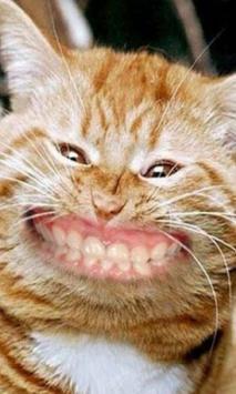Cat Smiling Huge Live WP poster