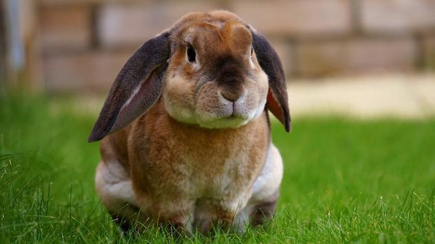 Rabbit wallpapers screenshot 6