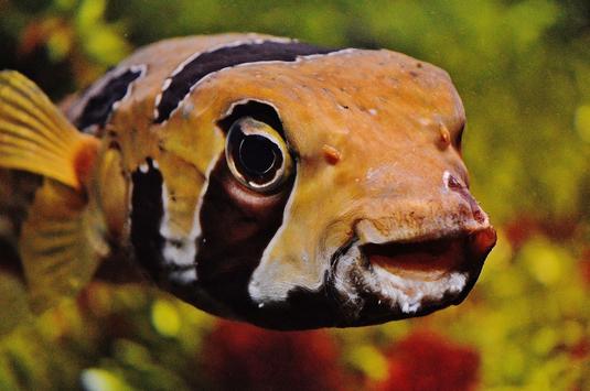 Underwater world wallpapers screenshot 11