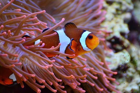 Underwater world wallpapers screenshot 23