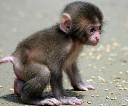 Cute Animal Babies Wallpaper تصوير الشاشة 7