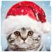 Christmas Photo Frames, Effects & Cards Art 🎄 🎅 APK
