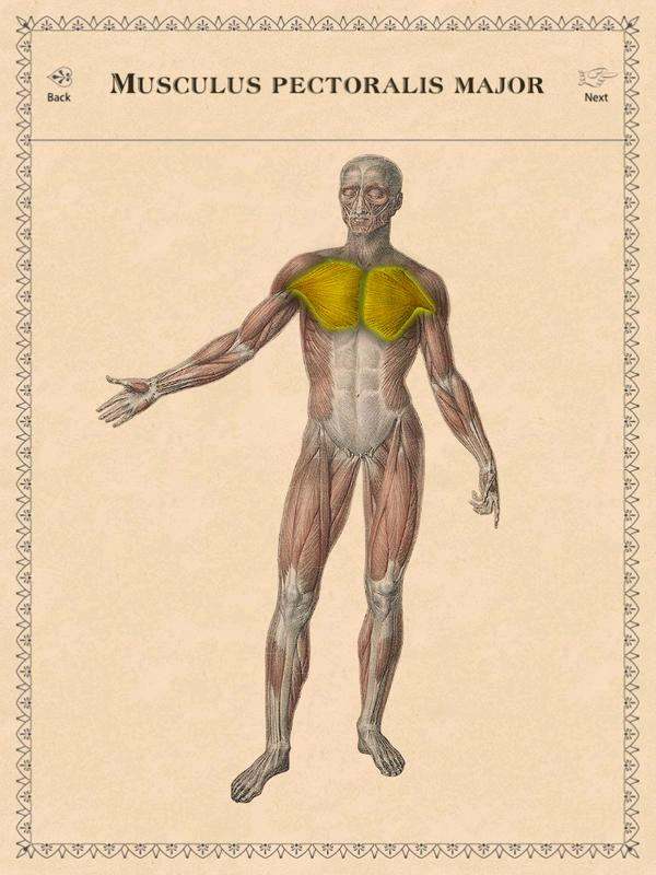 Classic Anatomy APK Download - Free Medical APP for Android ...
