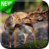Deers Video Live Wallpaper icon