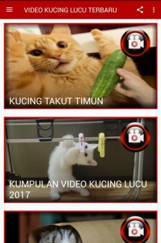 VIDEO KUCING LUCU TERBARU for Android APK Download
