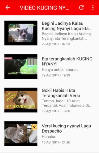 Video Kucing Lucu Ngakak Abis For Android Apk Download