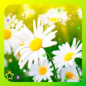 Camomile Flower live wallpaper icon